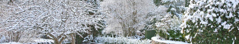Winterizing Your Yard